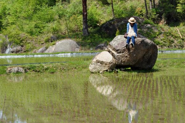 お米栽栽培環境
