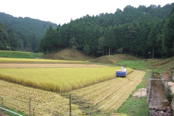 お米栽培環境